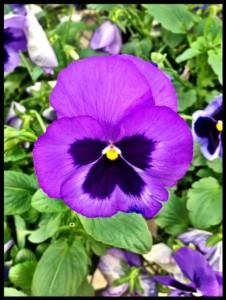 PurpleJoy